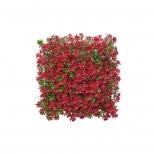 ديوار سبز مصنوعي مدل خورشيدي رنگ قرمز و سبز مانا چمن