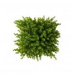 دیوار سبز مصنوعی مدل شمشاد سبز سایز بزرگ مانا چمن